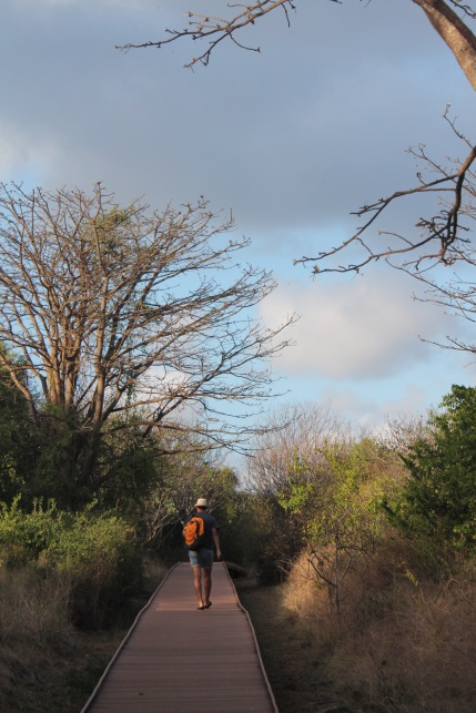 Caminata-Bahia-Golfinhos-Noronha-Brasil