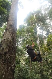 Tree Climbing, Tambopata