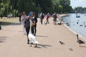 Londres-UK-Hyde-Park-Aves