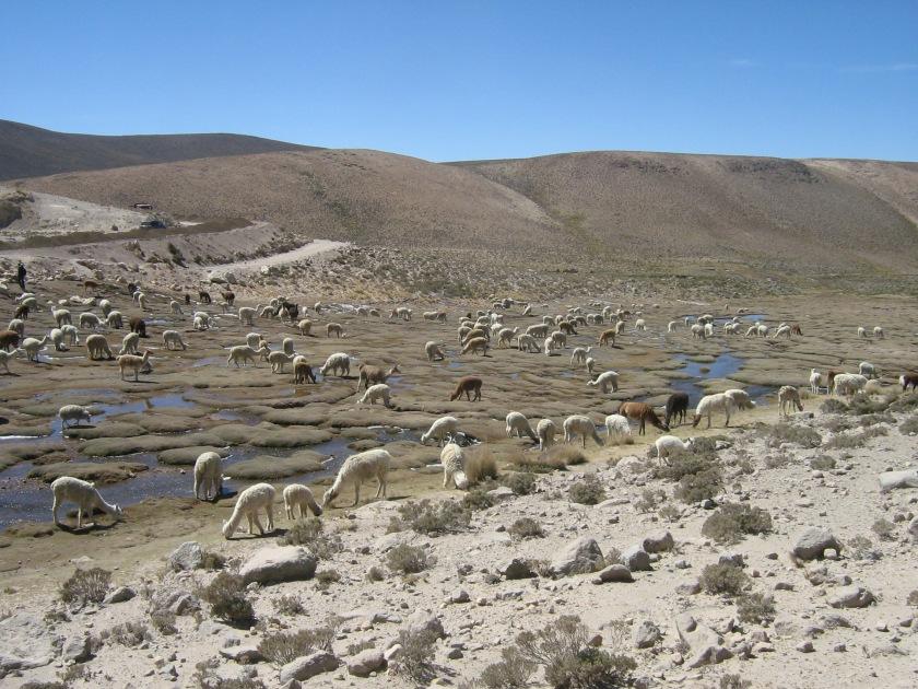 Camino al Colca